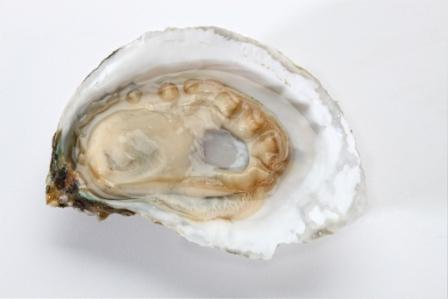 Buy Fresh Anderson's Neck Oysters Online