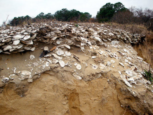 oysters1-864291d5c337c088590765839a63b3973c863652-s800-c85